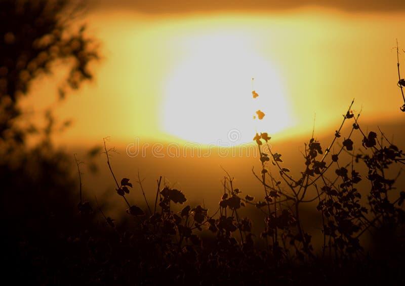 Zonsondergangmening door struiken voor achtergronden royalty-vrije stock foto