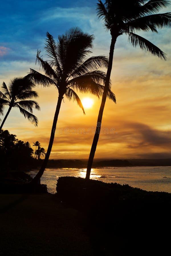 Zonsondergangpalmen op Maui Hawaï stock afbeeldingen