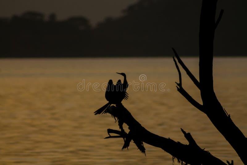 Zonsondergangsilhouet van een vogelzitting op een boomtak royalty-vrije stock afbeelding