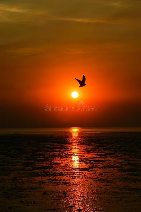Zonsondergangsilhouet van overzees en zeemeeuw stock fotografie