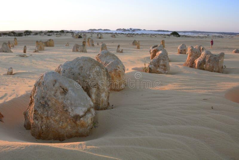Zonsondergangtijd bij Toppenwoestijn Nambung Nationaal Park cervantes Westelijk Australië australië stock foto's