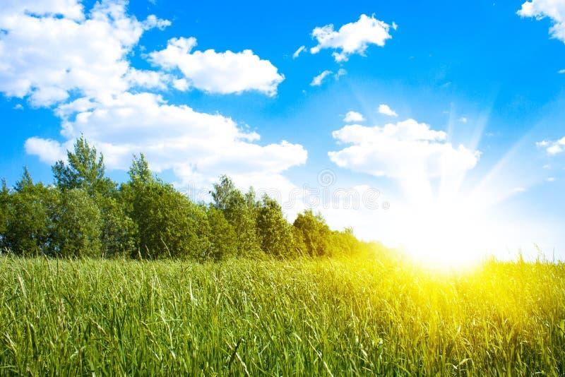 Zonsondergangzon en gebied van groen vers gras stock afbeelding