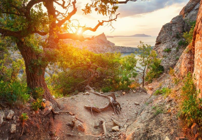 Zonsopgang in bergen met weg door de bosaard backgr stock fotografie