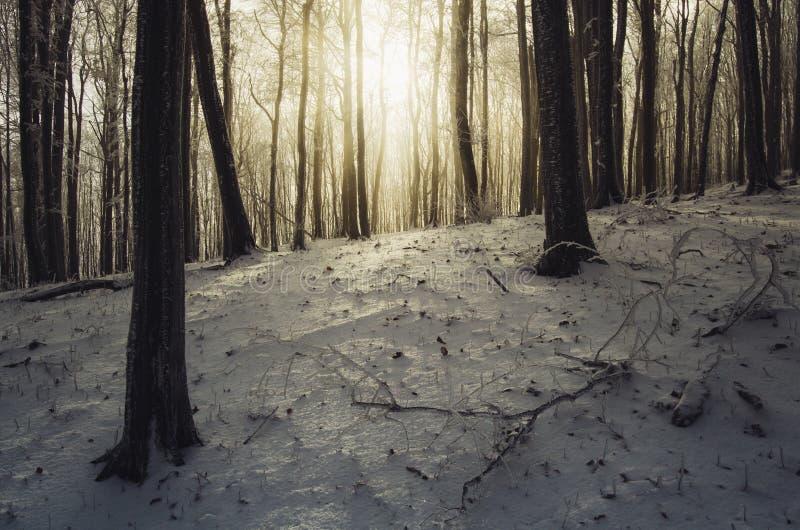 Zonsopgang in bevroren bos in de winter stock fotografie