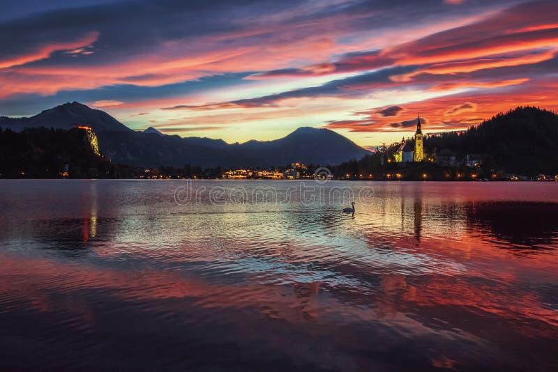 Zonsopgang bij het mooie die Meer met zwaan, Slovenië wordt afgetapt royalty-vrije stock foto