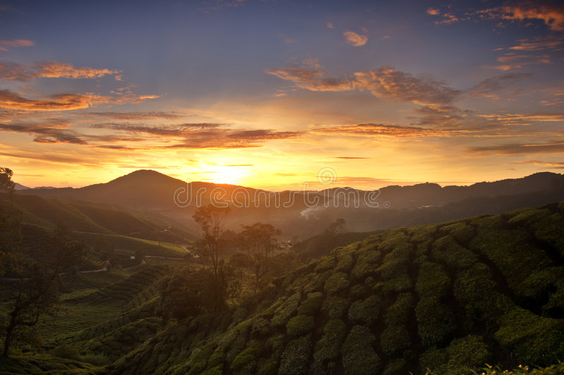 Zonsopgang in Cameron Highlands stock afbeeldingen