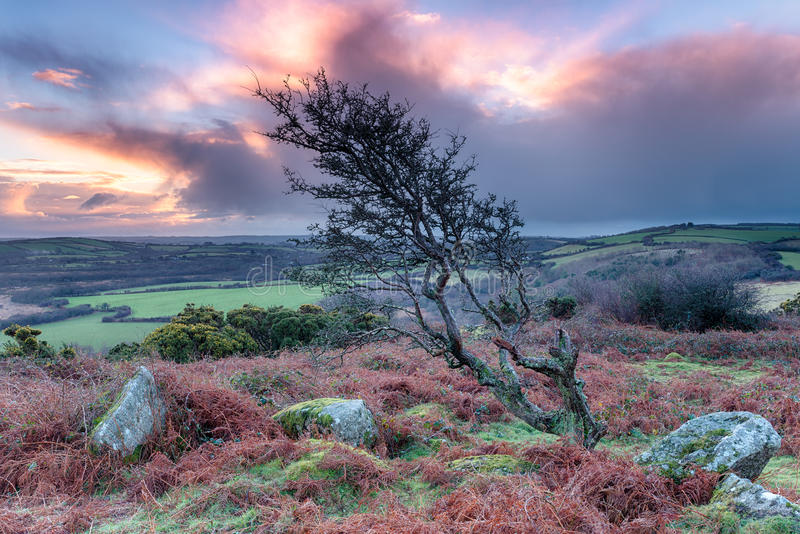 Zonsopgang in Cornwall stock afbeeldingen