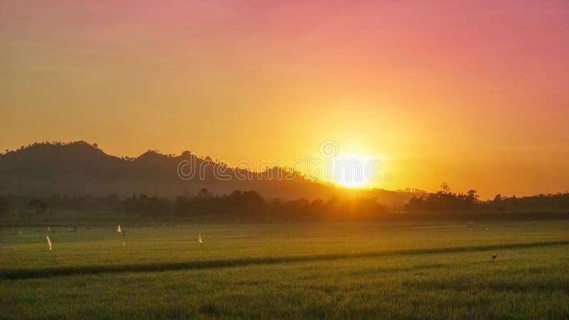 Zonsopgang in de heuvel en het padieveld stock foto's