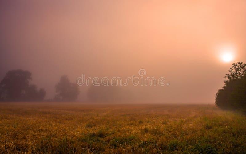 Zonsopgang in de mist royalty-vrije stock fotografie
