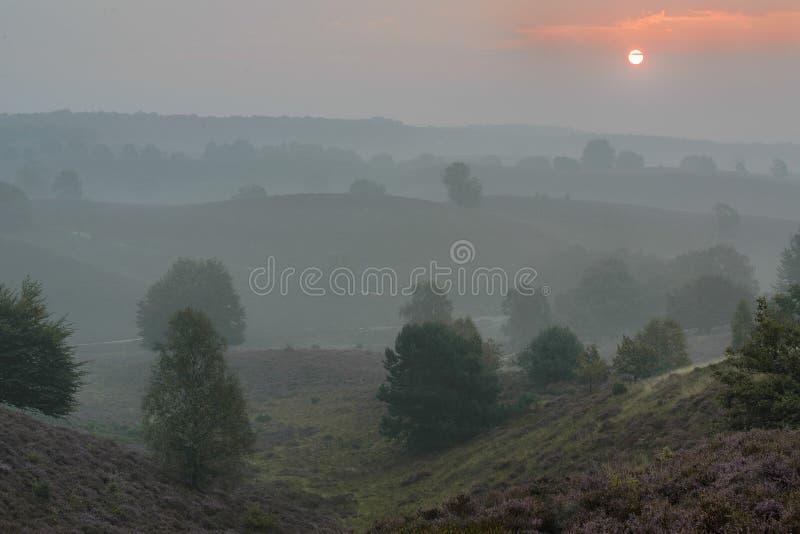 Zonsopgang in de mist stock afbeeldingen