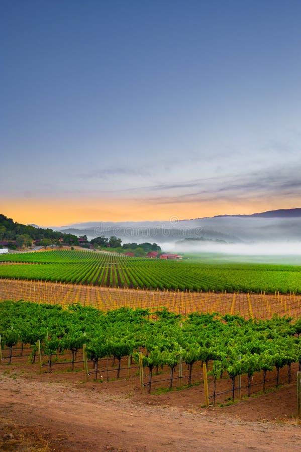 Zonsopgang in de wijngaarden royalty-vrije stock foto