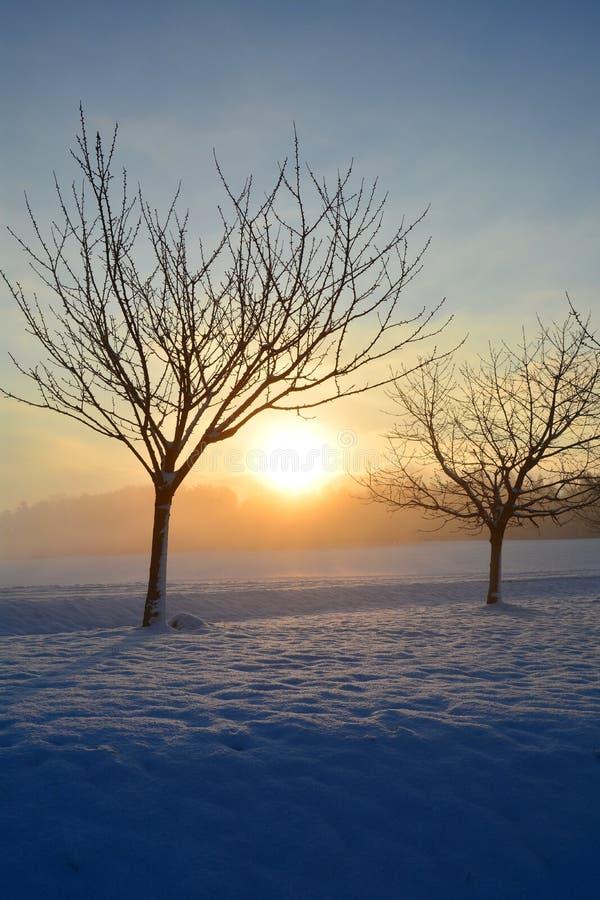 Zonsopgang in de winter met bomen royalty-vrije stock foto's