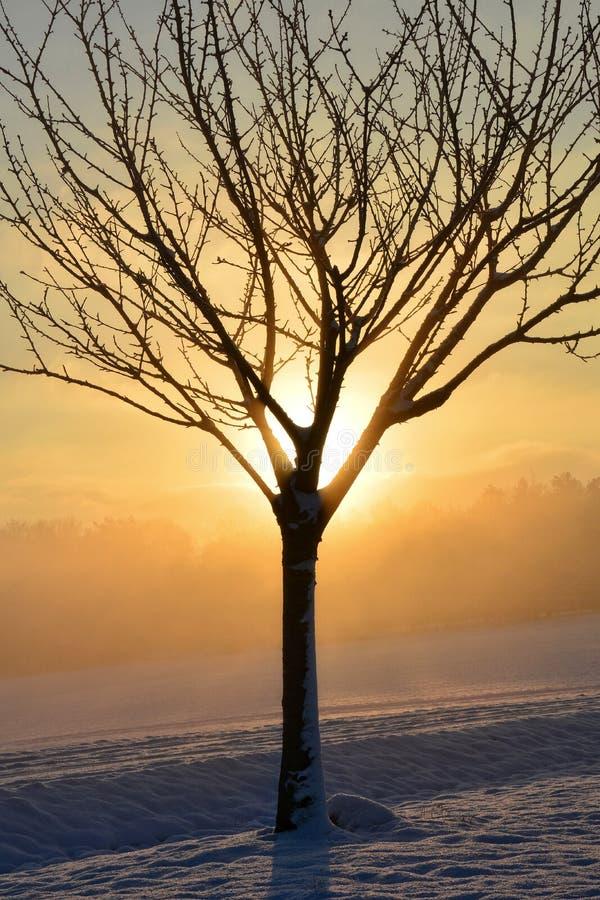 Zonsopgang in de winter met boom stock fotografie