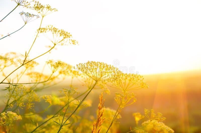 Zonsopgang in de zomer stock afbeeldingen