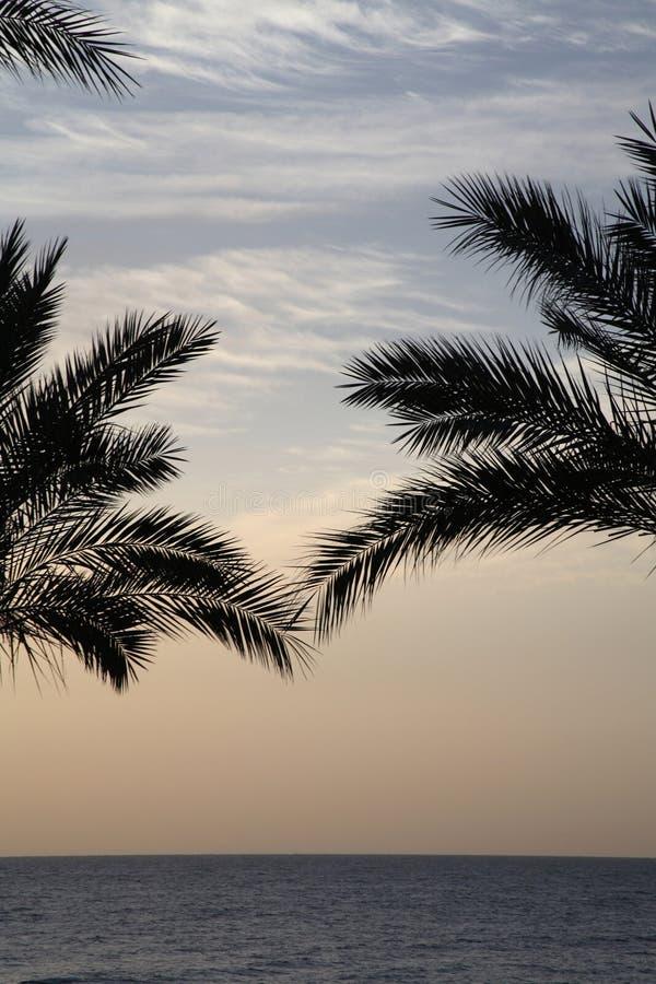 Zonsopgang dichtbij het overzees, palmen royalty-vrije stock foto