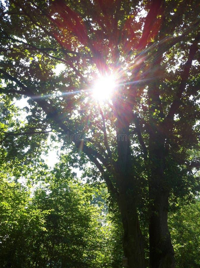 Zonsopgang door bomen royalty-vrije stock afbeeldingen