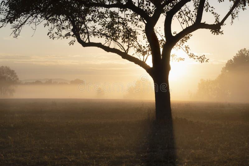 Zonsopgang door de mist over boomsilhouet royalty-vrije stock foto's