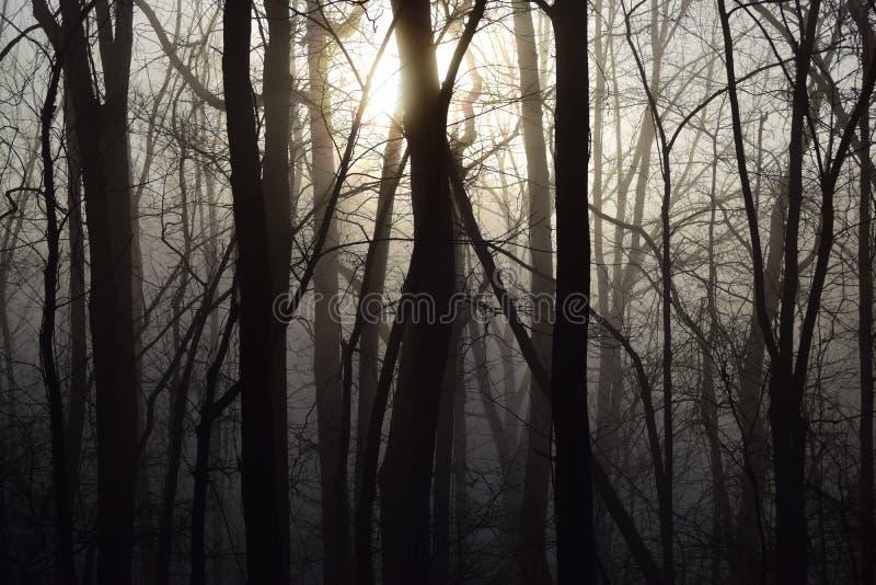 Zonsopgang door een mistig en donker bos royalty-vrije stock fotografie