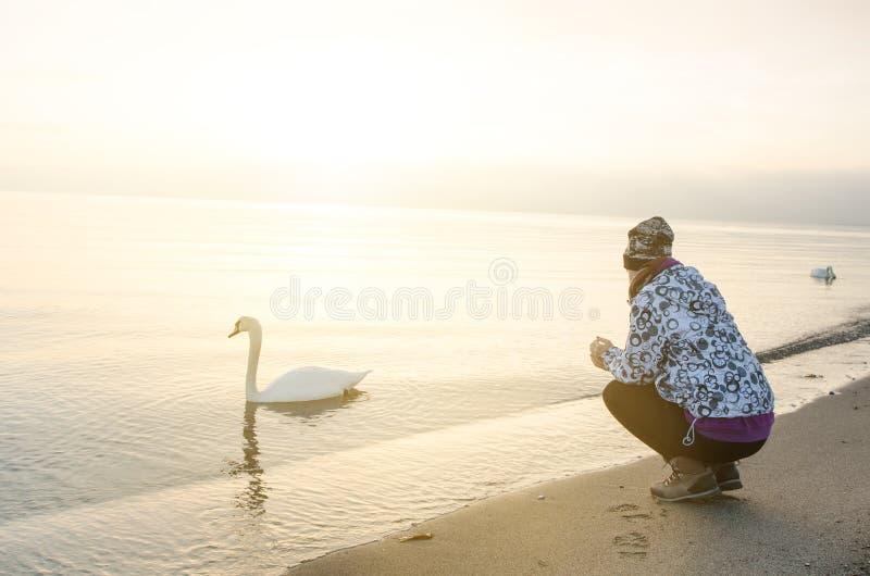 Zonsopgang in een aard meisje en zwaan overzees zoals een achtergrond Kopenhagen 1 3 2015 royalty-vrije stock foto's