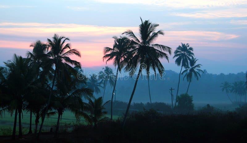 Zonsopgang in een palmbosje, Goa, India stock foto's
