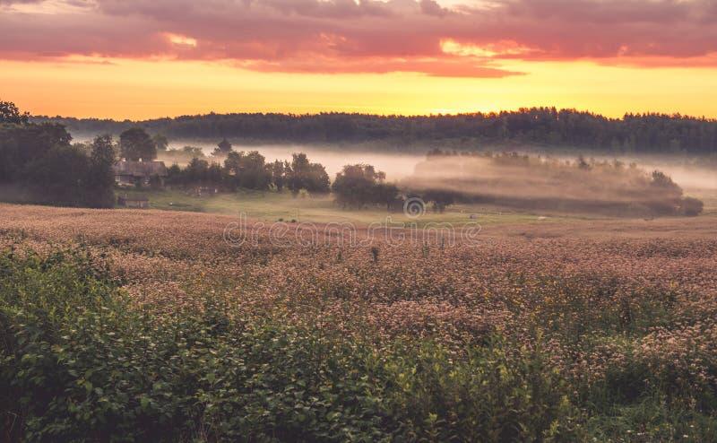 Zonsopgang en Mist stock foto's