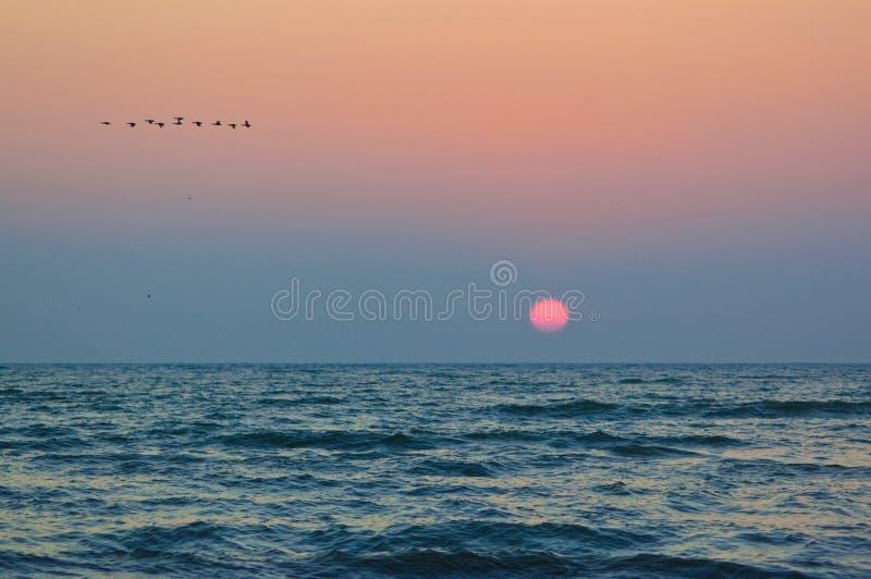 Zonsopgang en vogels, op de kust van de Zwarte Zee stock afbeeldingen