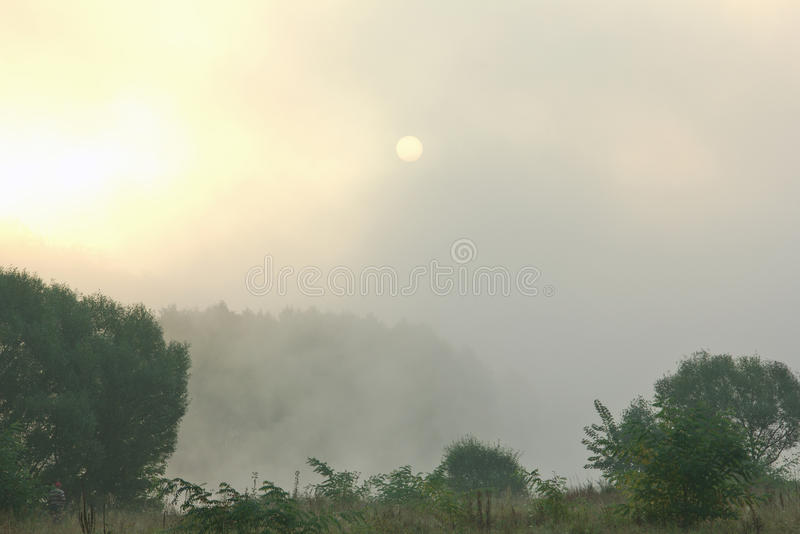 Download Zonsopgang In Het Bos Met Een Dichte Mist Stock Foto - Afbeelding bestaande uit ochtend, horizon: 39105060