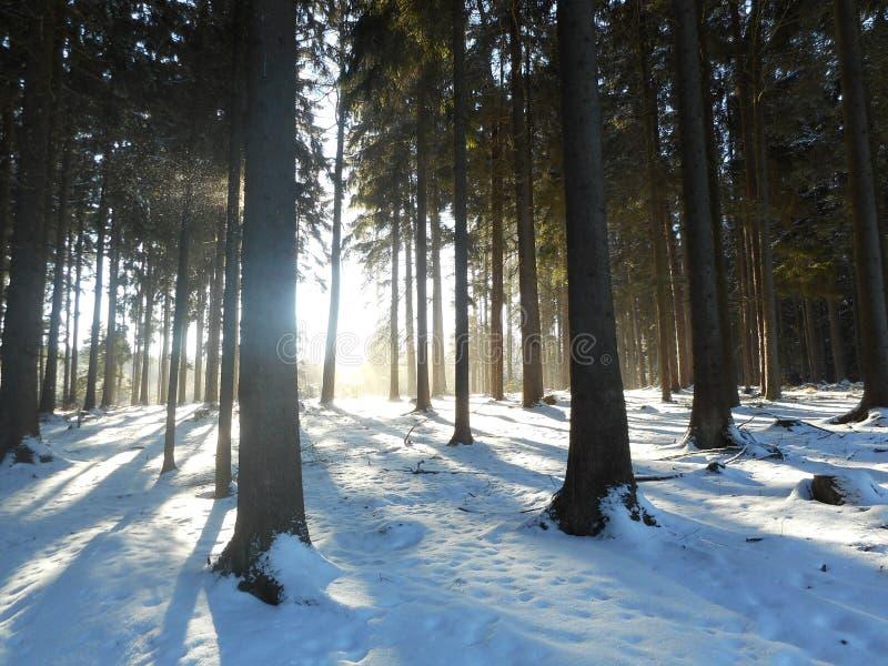 Zonsopgang in het bos met zonlicht en mist in de winter stock afbeelding