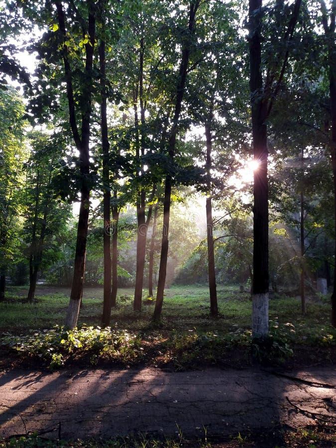 Zonsopgang in het bos royalty-vrije stock foto's