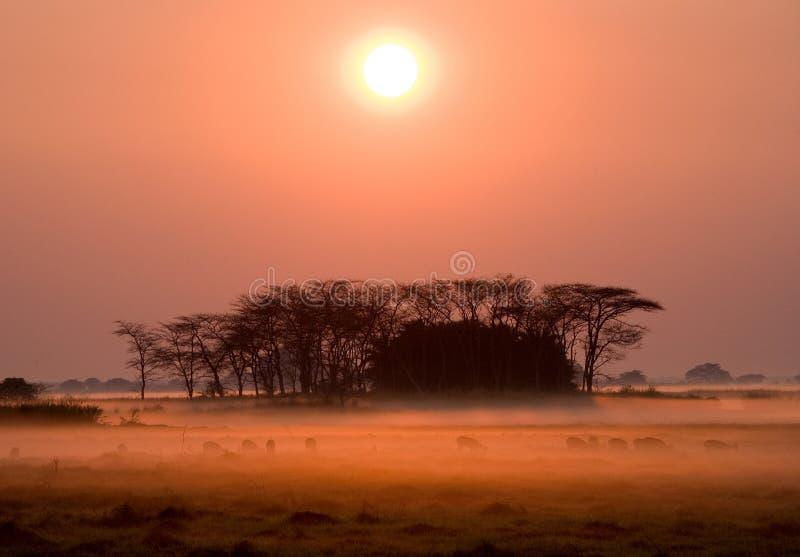 Zonsopgang in het Nationale Park van Kafue De overweldigende roze mist Afrika zambia stock afbeelding