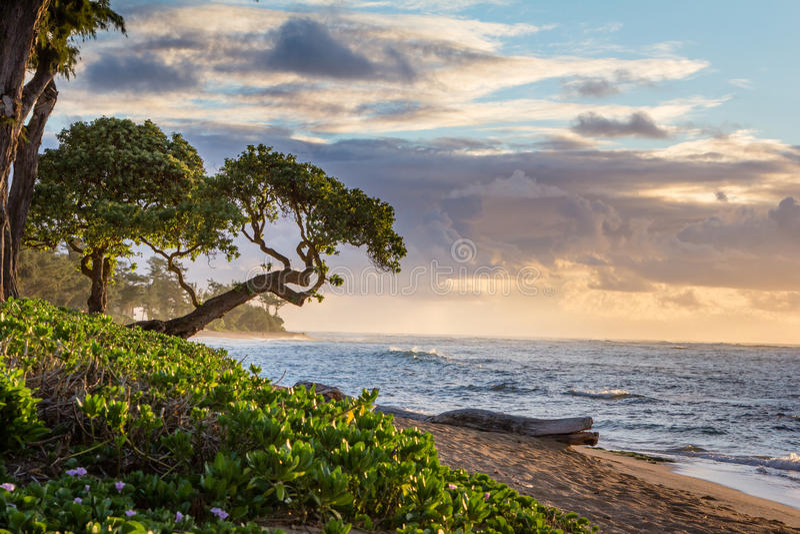 Zonsopgang in Kauai, Hawaï royalty-vrije stock afbeeldingen