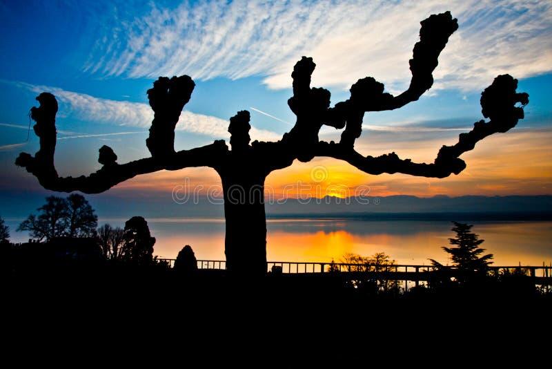 Zonsopgang in Meer Genève, Zwitserland stock fotografie