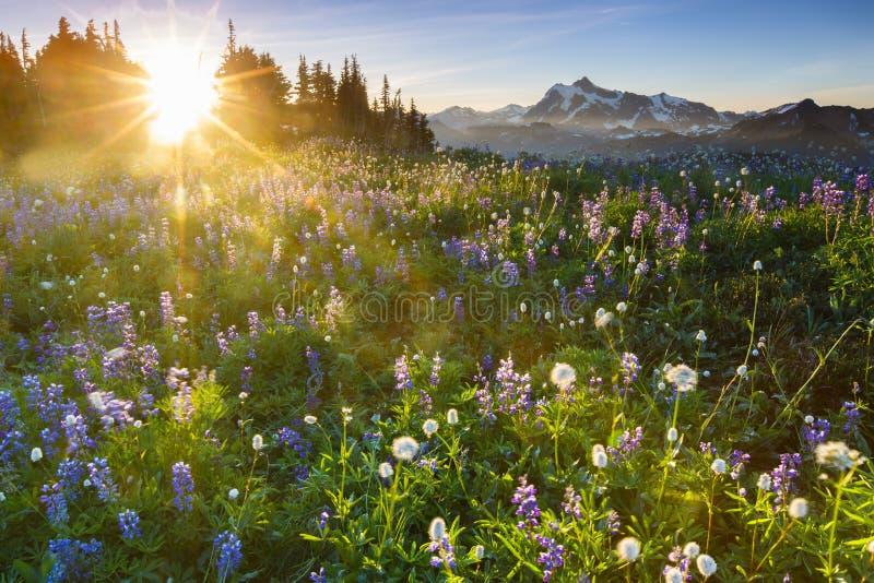 Zonsopgang met bloemen stock afbeelding