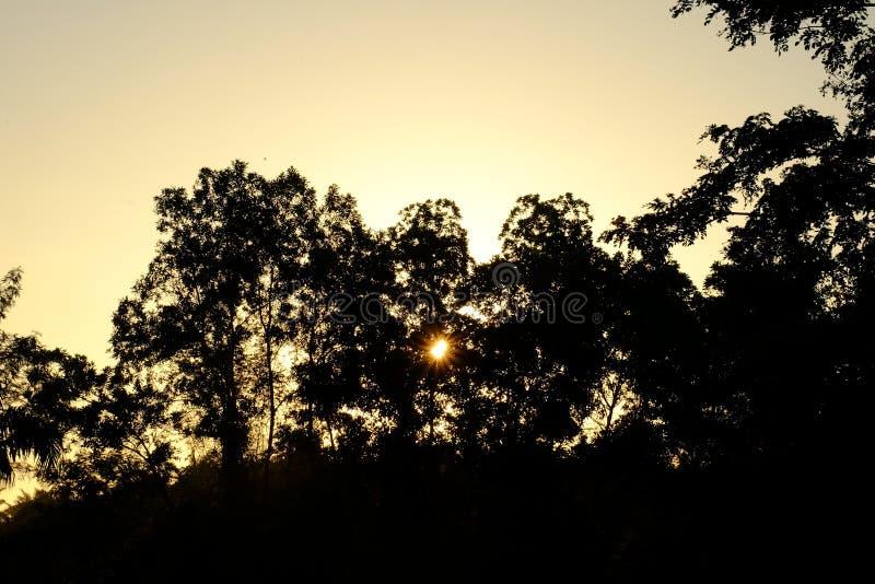 Zonsopgang met bomen in het bos royalty-vrije stock foto