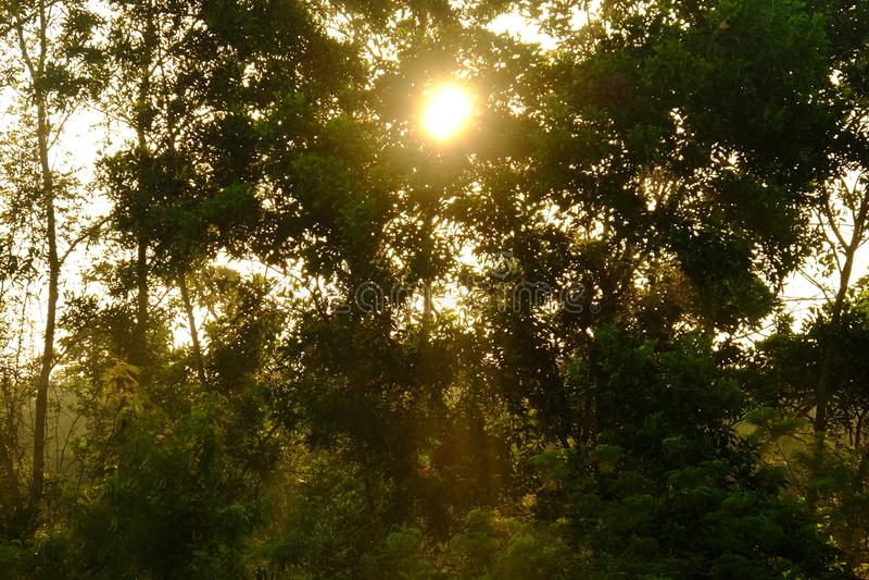 Zonsopgang met bomen in het bos royalty-vrije stock afbeelding