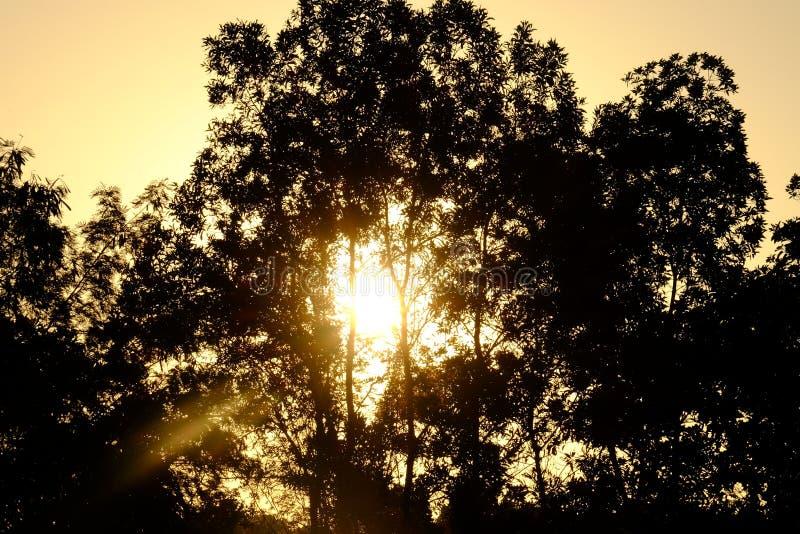 Zonsopgang met bomen in het bos stock fotografie