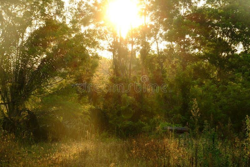 Zonsopgang met bomen in het bos stock foto