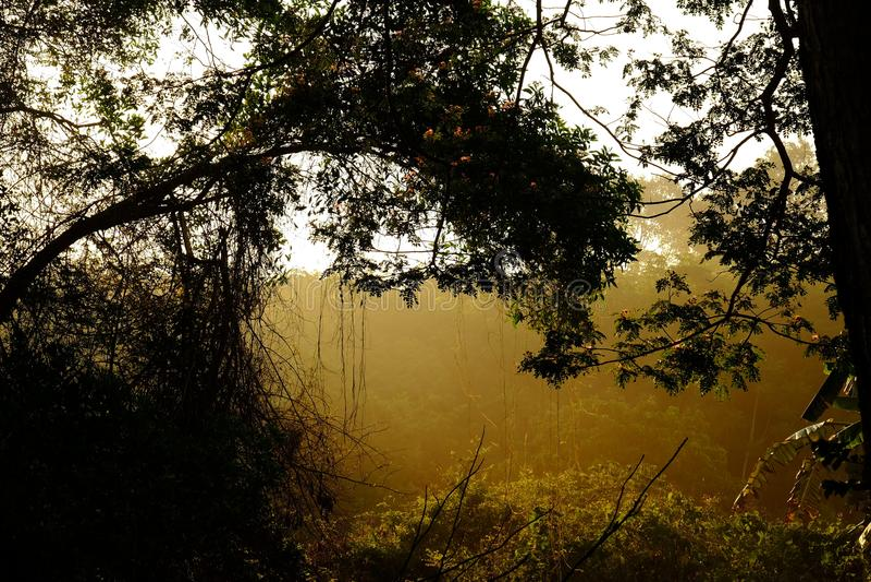 Zonsopgang met bomen in het bos stock afbeeldingen