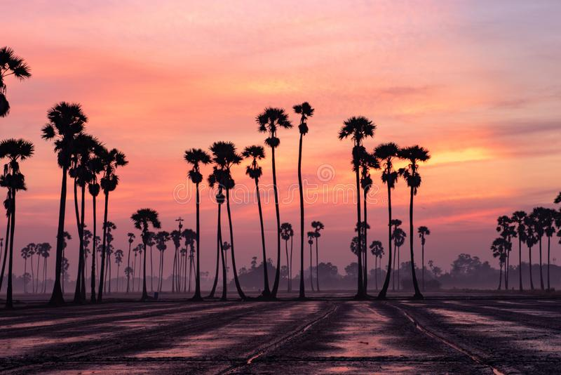 Zonsopgang met Sugar Palm Tree stock foto's