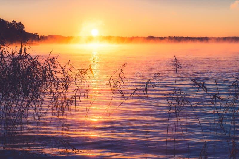 Zonsopgang Misty Lake royalty-vrije stock fotografie