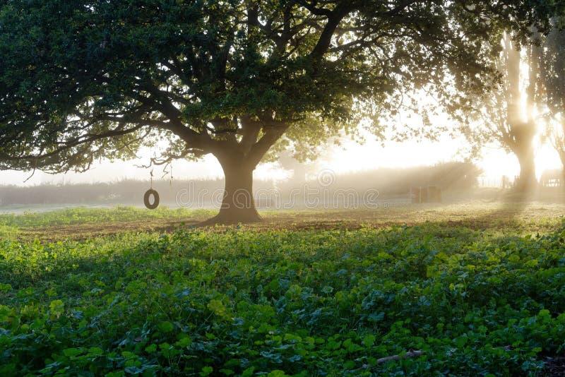 Zonsopgang op een mistige ochtend op een landbouwbedrijf royalty-vrije stock afbeeldingen