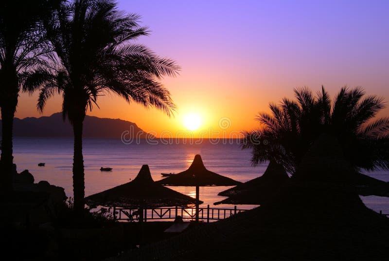 Zonsopgang op het rode overzees onder palmen en paraplu's stock foto's