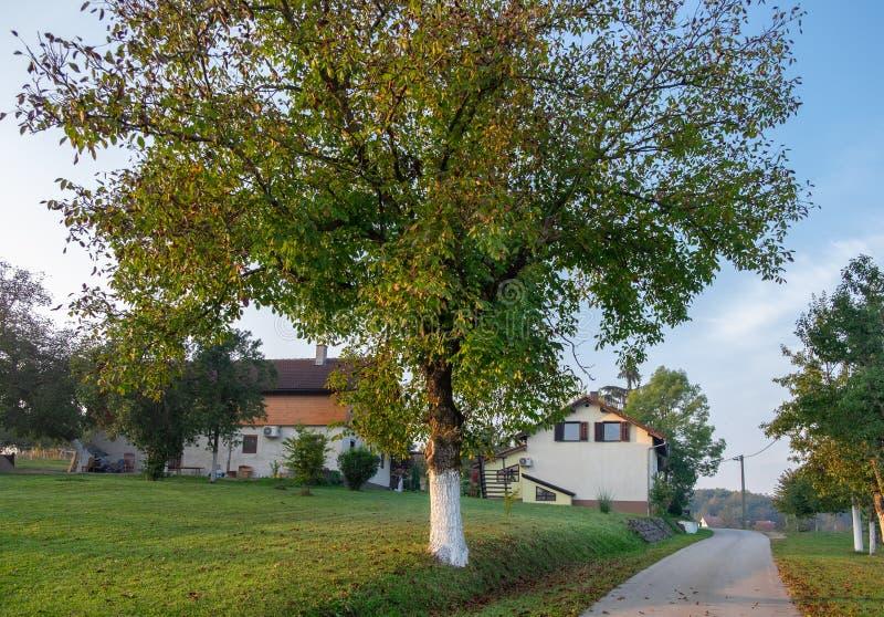 Zonsopgang op vroege ochtend bij typisch Kroatisch dorp royalty-vrije stock foto