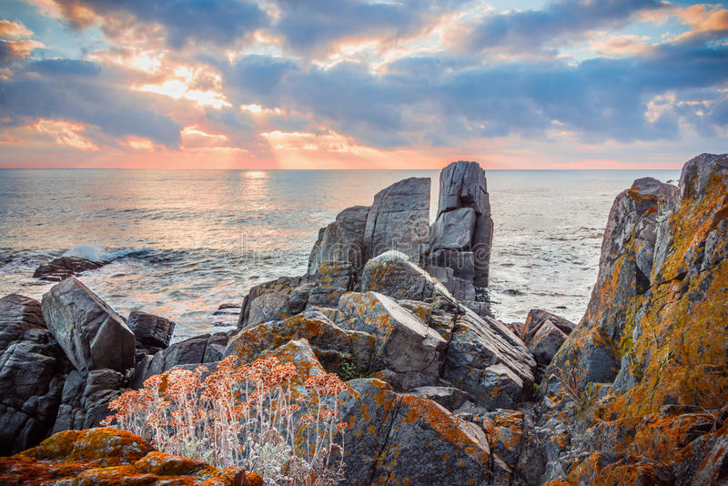 Zonsopgang over een rotsachtig strand Bloeiende wilde bloemen over de steen stock afbeelding