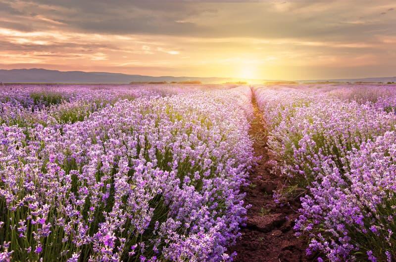Zonsopgang over lavendelgebied in Bulgarije royalty-vrije stock afbeeldingen