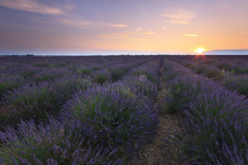 Zonsopgang over lavendelgebied - Valensole royalty-vrije stock fotografie