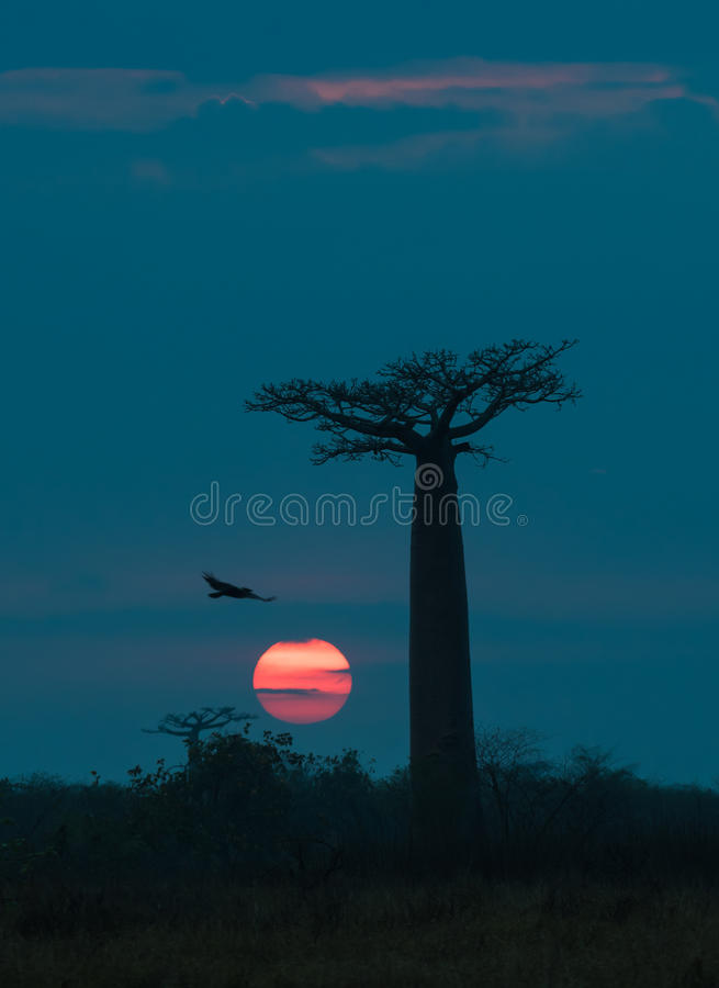 Zonsopgang over Weg van de baobabs, Madagascar royalty-vrije stock fotografie