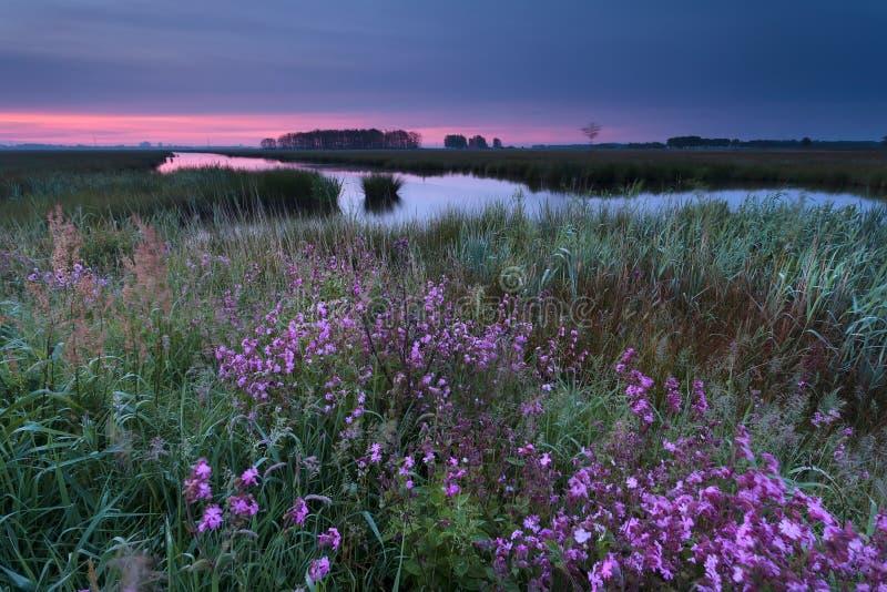Zonsopgang over wildflowers door rivier royalty-vrije stock fotografie