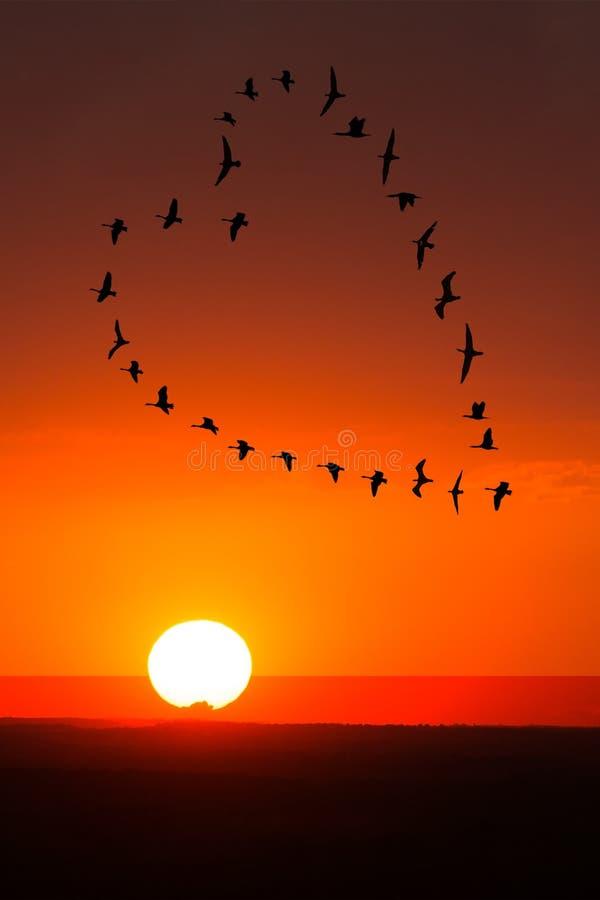 Zonsopgang, Romaanse Zonsondergangliefde, Vogels royalty-vrije stock afbeeldingen