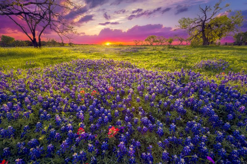 Zonsopgang in Texas Hill Country royalty-vrije stock afbeelding